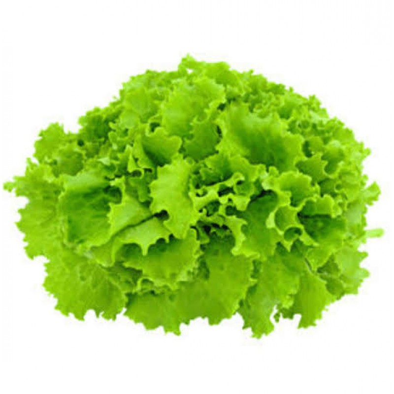 Green Coral Lettuce  1 Each