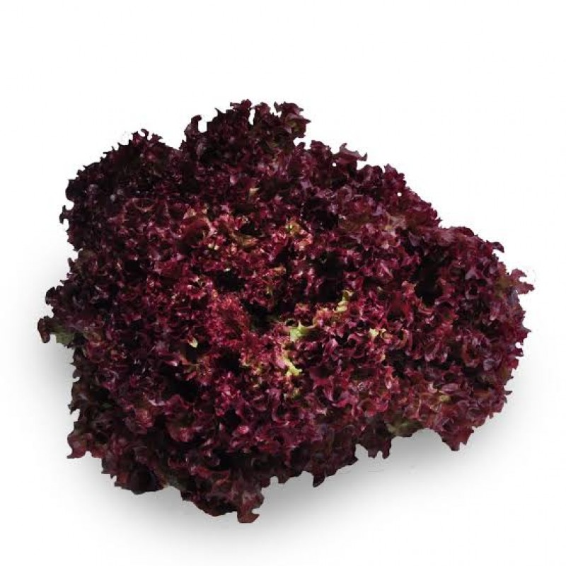 Red Coral Lettuce  1 Each